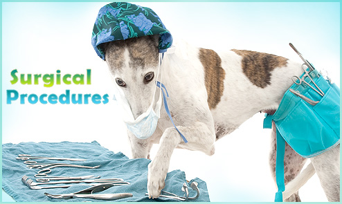 Pets Surgical Procedures